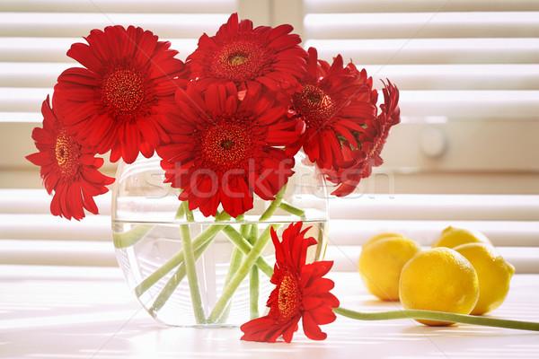 Fresh gerbera daisy in on table  Stock photo © Sandralise