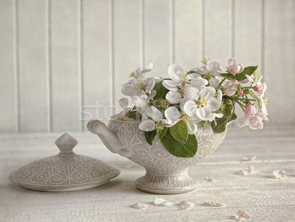 Bloesems porselein vaas hemel bloem voorjaar Stockfoto © Sandralise