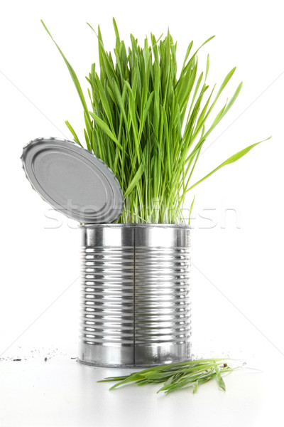 Closeup of wheatgrass in an aluminium can on white Stock photo © Sandralise