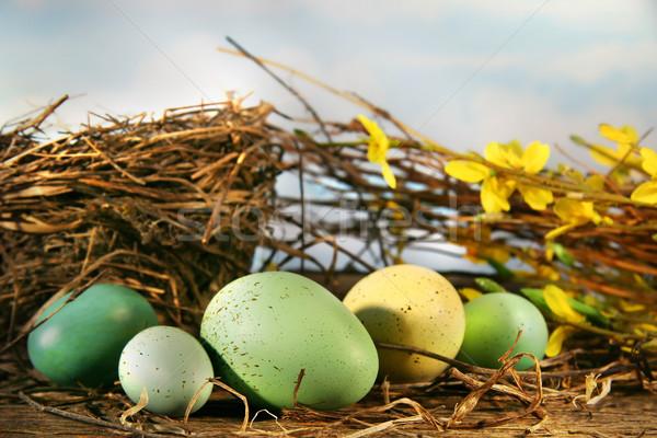 鳥の巣 卵 空 イースター 春 食品 ストックフォト © Sandralise