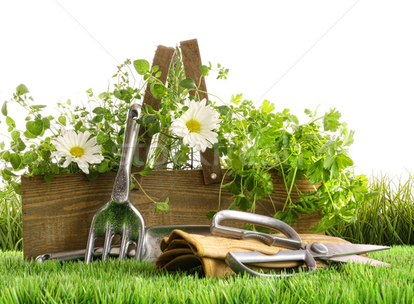 Fresh herbs in wooden box on grass Stock photo © Sandralise