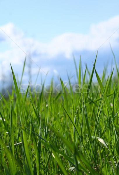 Wild gras grasveld voorjaar gelukkig natuur Stockfoto © Sandralise