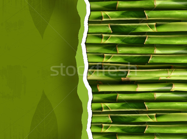 Dense bamboo stalk with copyspace Stock photo © Sandralise