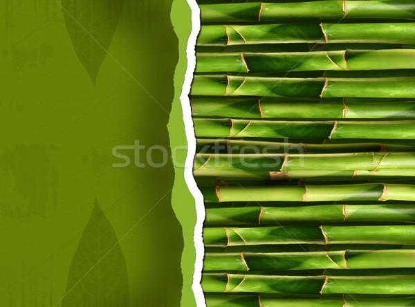 Bambu bo ağaç doğa yeşil Stok fotoğraf © Sandralise