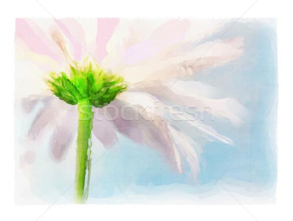Aquarel roze daisy Blauw zomer hemel Stockfoto © Sandralise
