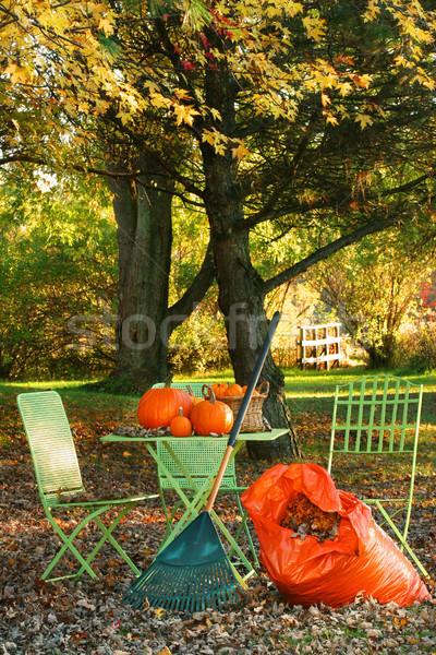 Raking leaves  Stock photo © Sandralise
