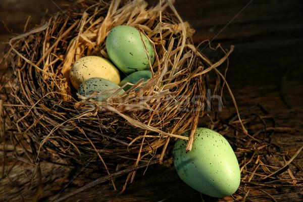 Speckled eggs in nest  Stock photo © Sandralise