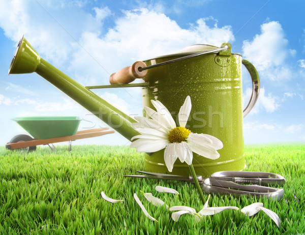 Green watering can with large daisy Stock photo © Sandralise