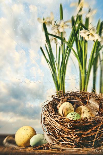 Сток-фото: гнезда · яйца · цветы · Пасху · весенние · цветы · весны