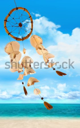 Sea shells blowing in the wind Stock photo © Sandralise