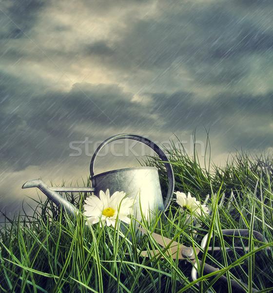 Sulama çiçekler yaz yağmur fırtına çim Stok fotoğraf © Sandralise