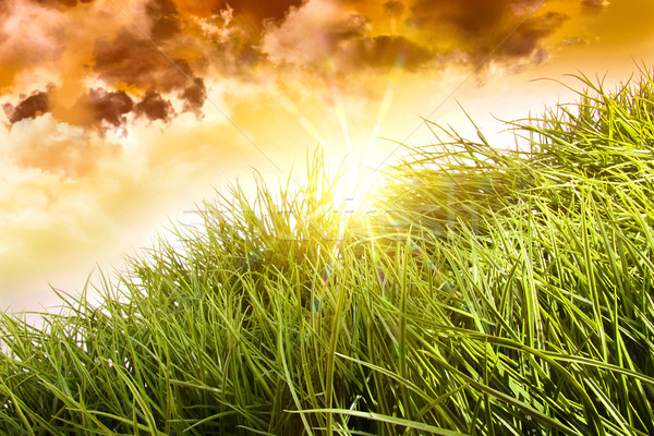Tall grass blowing in the wind Stock photo © Sandralise