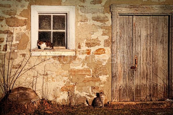 農村 納屋 猫 太陽 空 ストックフォト © Sandralise