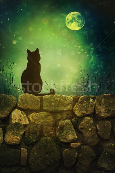Gato preto rocha parede halloween noite velho Foto stock © Sandralise