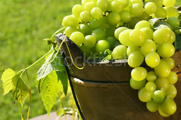 Green grapes in the sun Stock photo © Sandralise