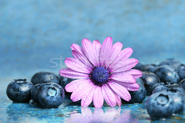 Pink daisy with blueberries Stock photo © Sandralise
