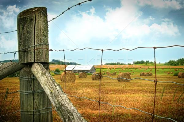 Field of freshly cut bales of hay Stock photo © Sandralise