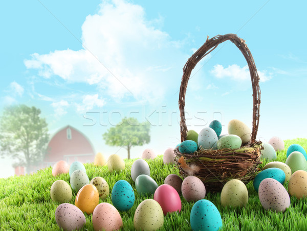 Colorful easter eggs in field of grass  Stock photo © Sandralise