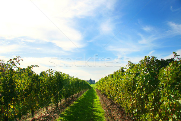 Vineyards on Niagara  Stock photo © Sandralise
