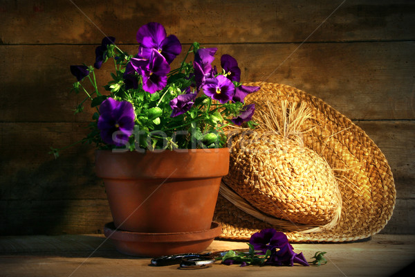 Purple pansies with old straw hat Stock photo © Sandralise