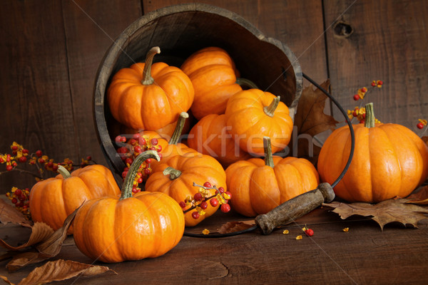 Stock photo: Wooden bucket filled with tiny pumpkins