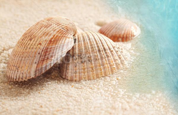 Conchiglie umido sabbia piccolo spiaggia acqua Foto d'archivio © Sandralise