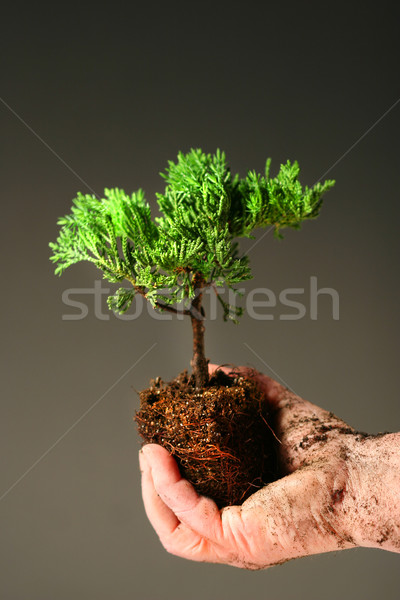 Soiled hand holding a small tree  Stock photo © Sandralise