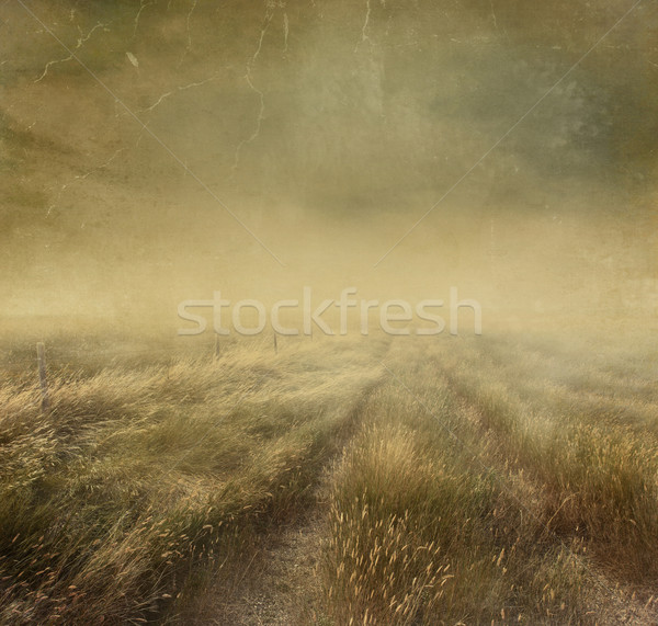 Prairie grasses with vintage color filters Stock photo © Sandralise