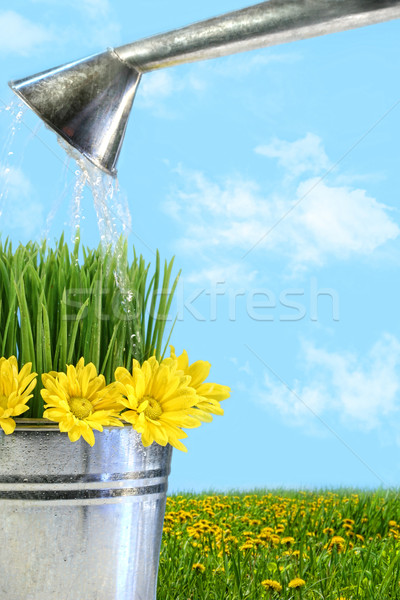 Watering flowers and grass for spring Stock photo © Sandralise