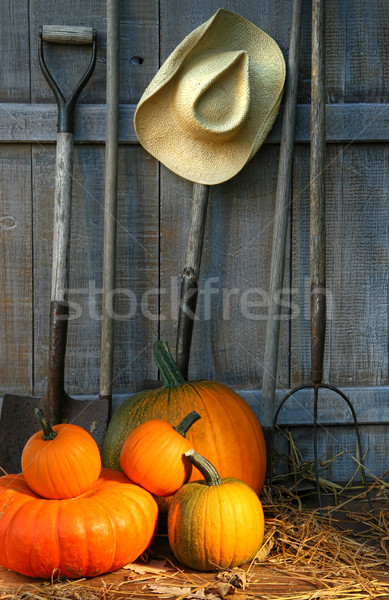 Pile of pumpkins with tools  Stock photo © Sandralise