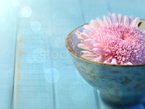 Stock photo: Close up of chrysanthemum flower in bowl