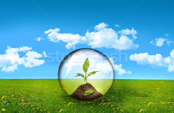 Stock photo: Glass sphere with plant in a field of tall grass