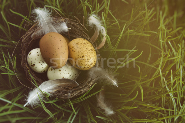 Nest with speckled eggs in the grass Stock photo © Sandralise