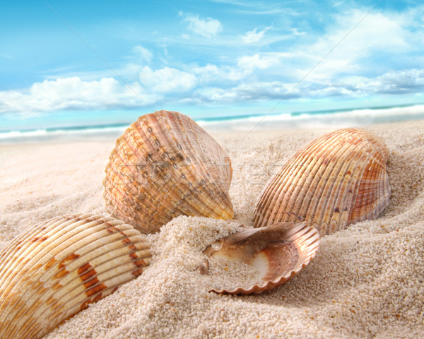 Seashells in the sand at the beach Stock photo © Sandralise