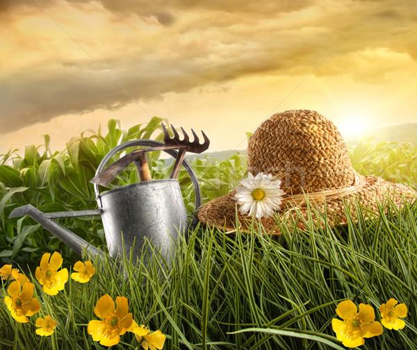 Stock fotó: Víz · konzerv · szalmakalap · fektet · mező · kukorica