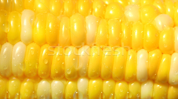 Close-up of a corn Stock photo © Sandralise