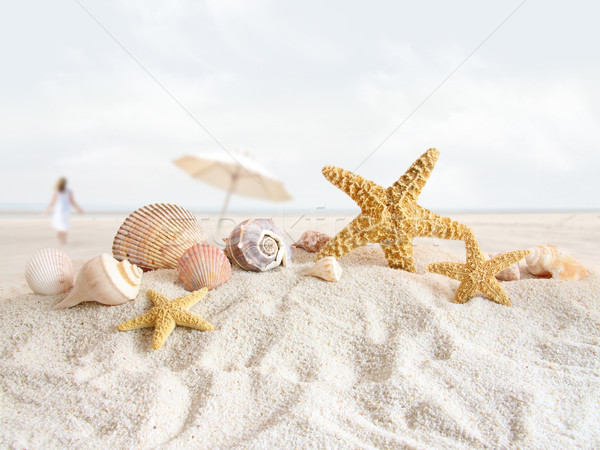Starfish and seashells  at the beach Stock photo © Sandralise