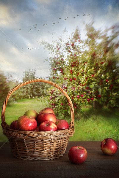 Basket of apples on table in orchard Stock photo © Sandralise