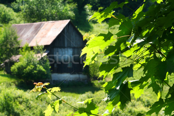Old barn on the hill Stock photo © Sandralise