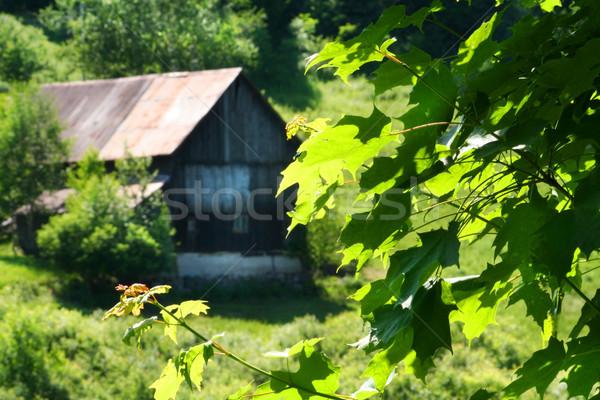 Vecchio fienile Hill porta finestra estate Foto d'archivio © Sandralise