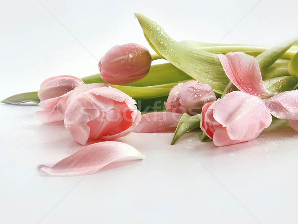 Pink tulips with water droplets Stock photo © Sandralise