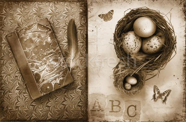 Old books with bird nests on grunge Stock photo © Sandralise