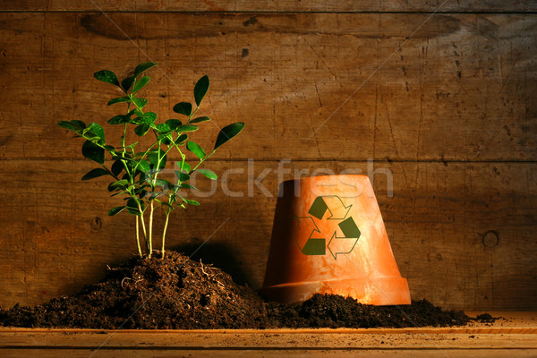 Close-up of young plant  with flower pot Stock photo © Sandralise