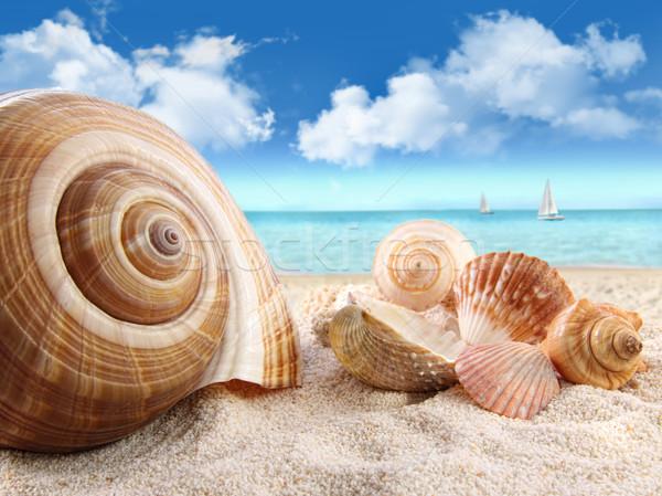 Conchas praia grupo fundo oceano azul Foto stock © Sandralise