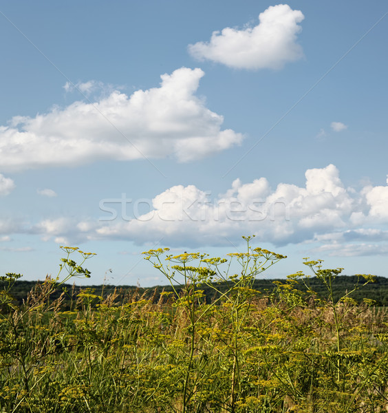 Koper rozwój dziedzinie wiosną żywności Zdjęcia stock © Sandralise