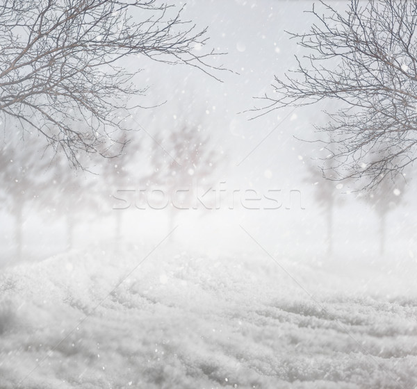 Snowy winter background Stock photo © Sandralise