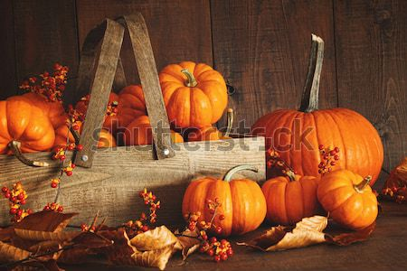 Festive autumn variety of gourds and pumpkins  Stock photo © Sandralise