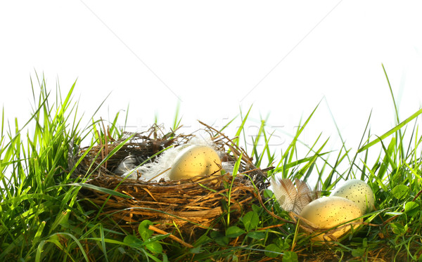 Eggs in the tall grass Stock photo © Sandralise