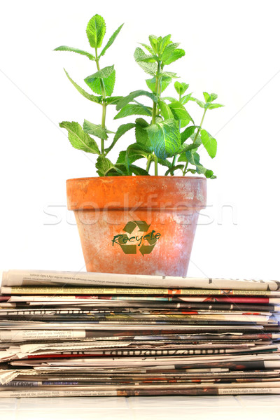 Potted plant on a stack of newspapers Stock photo © Sandralise
