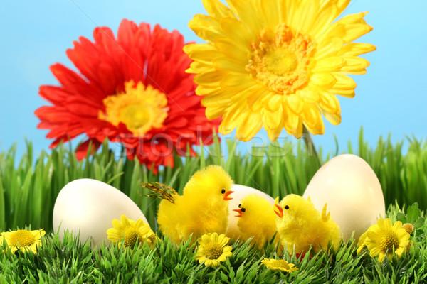 Stok fotoğraf: Paskalya · civciv · çim · çiçekler · mavi · gökyüzü · çiçek